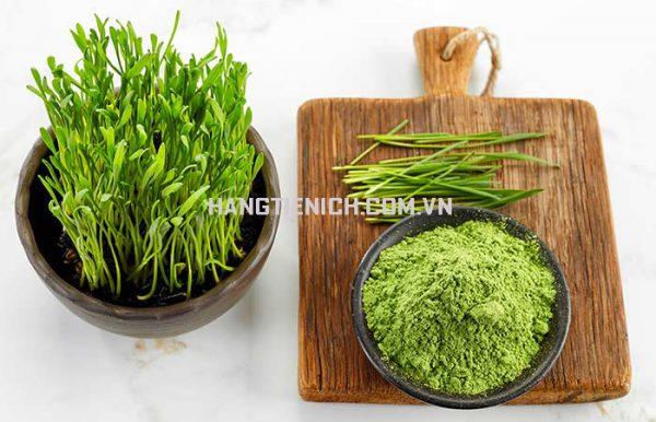 Bột cỏ lúa mì hữu cơ dinh dưỡng chất lượng giá rẻ
