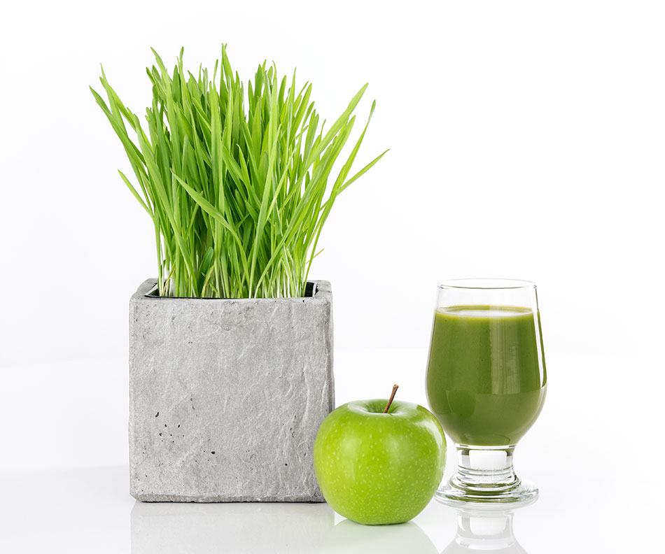 Uống nước ép cỏ lúa mì như thế nào?