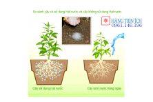 Hạt nước, Hạt giữ ẩm, polime siêu hấp thụ nước chống hạn hán cây trồng